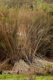 緑と赤みを帯びた色調の野原にある竹の塊