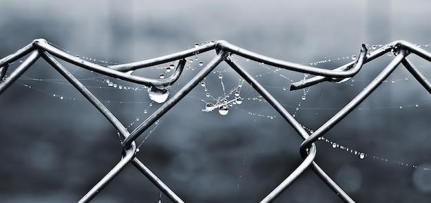 クモの巣と露が金属ネットに落ちる