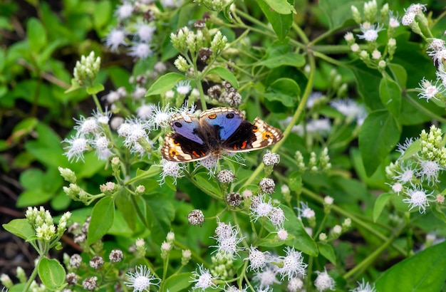 작은 꽃에 화려한 나비