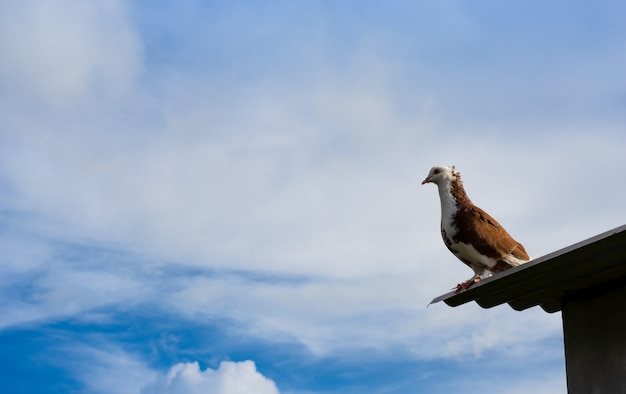 맑고 푸른 하늘 아래 지붕에 서 있는 화려한 비둘기