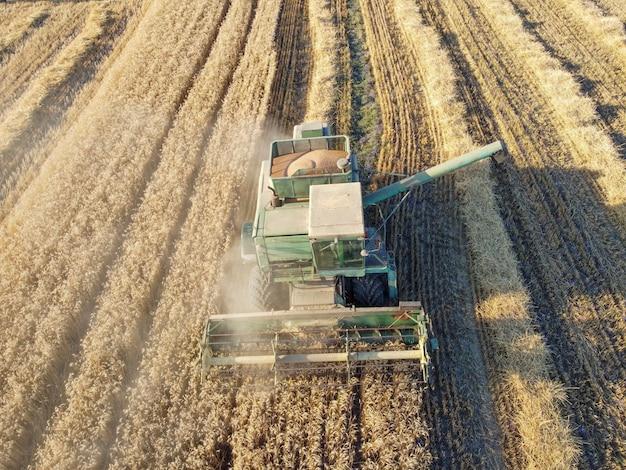 コンバインは、畑で小麦や大麦を収穫します。