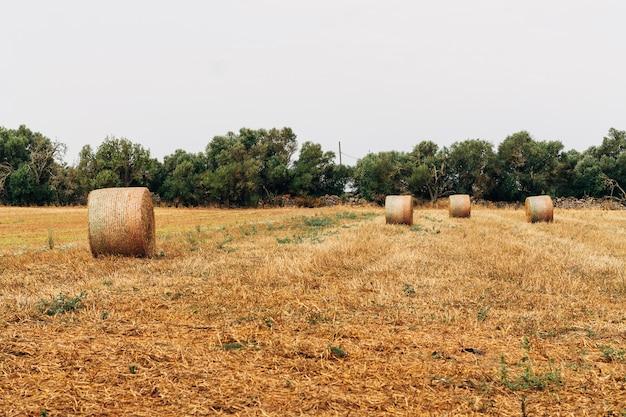 Концептуальная фотография сельской местности и выезд на природу.