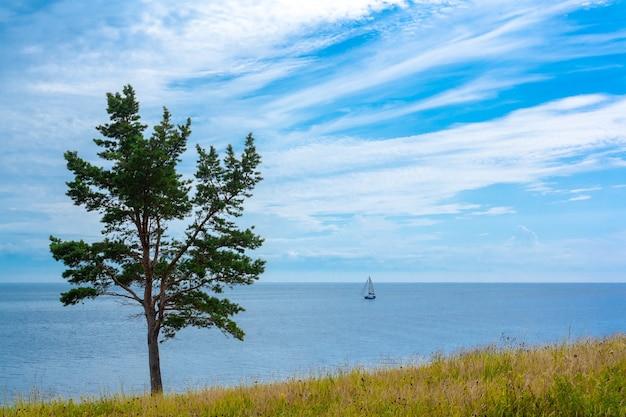 Хвойное дерево стоит на берегу байкала в солнечную летнюю погоду. на воде яхта, в небе облака.