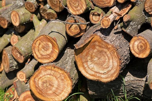 Поперечное сечение спиленного дерева крупным планом видно с опилками, частично покрывающими его.