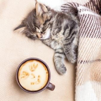 잠든 작은 새끼 고양이 근처에서 커피 한잔. 침대에서 뜨거운 커피. 아침은 커피로 시작됩니다. 깨어날 시간입니다. 광장_