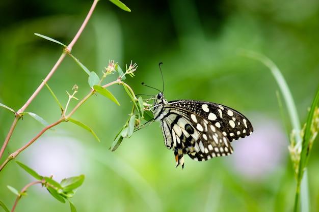 新鮮な緑の植物の葉の上で休んでいるキュートで愛らしいアゲハチョウの蝶