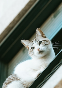 窓から通りの人々を見ているキュートで好奇心旺盛な猫