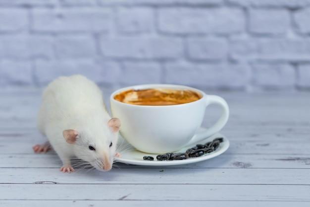 Милая и забавная маленькая белая декоративная крыса сидит рядом с чашкой кофе. утренний завтрак.
