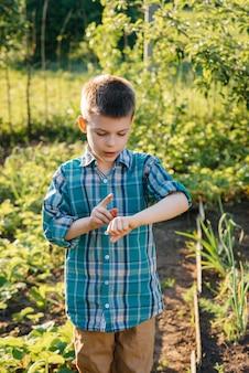 귀 엽 고 행복 유치원 소년 수집 하 고 일몰 여름 날에 정원에서 잘 익은 딸기를 먹는다. 행복한 어린 시절. 건강하고 환경 친화적 인 작물.