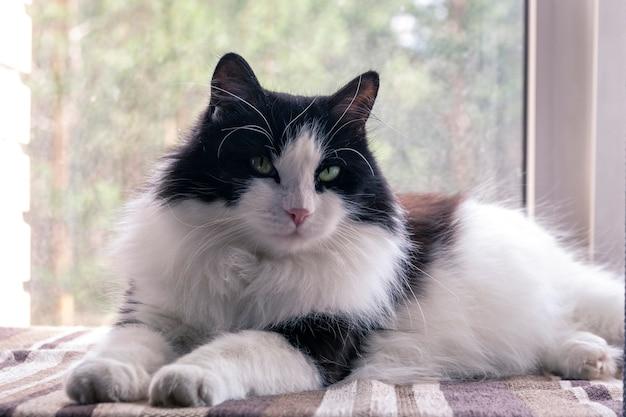 귀여운 흑백 국내 고양이 창 라이프 스타일에 앉아있다. 애완 동물, 수의학.