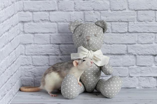 かわいい黒と白のネズミが白いレンガの壁に灰色のテディベアと遊んでいます