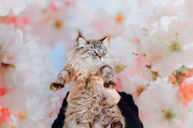かわいい品種の猫が横を向いており、女の子は猫を目の前に持っています