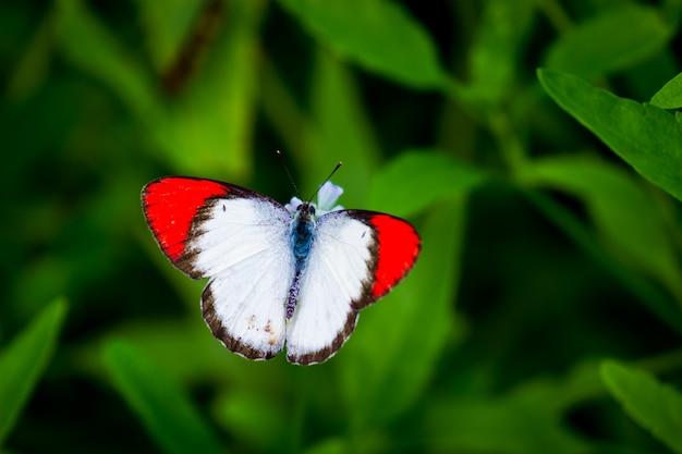 봄철에 녹색 잎에 쉬고 있는 귀여운 나비