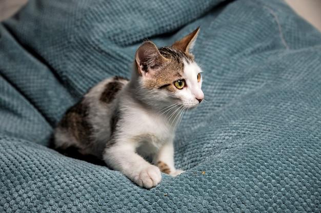 Милый пятнистый котенок с желтыми глазами на диване