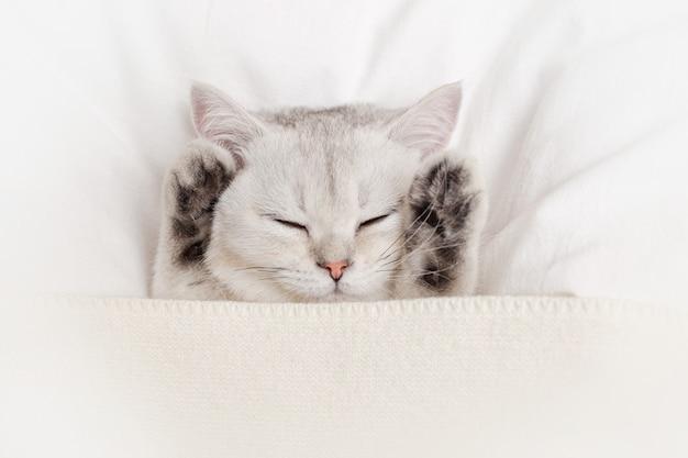 キュートで優しい白い子猫は、ニットの格子縞の白いベッドの上で足を寝かせます。