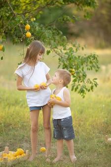 木の下の庭で夏のレモンと白いtシャツのブロンドの髪のかわいい女の子と男の子