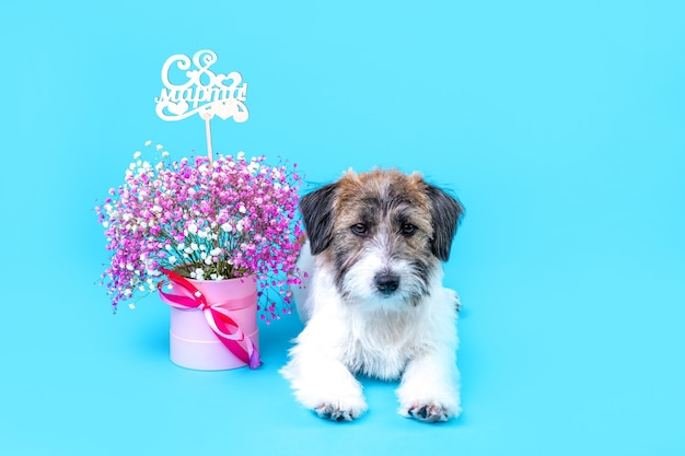 お祝いの帽子をかぶったかわいいジャックラッセルテリアの壊れた子犬は、青い背景の上のピンクの花の花束の横に座っています。