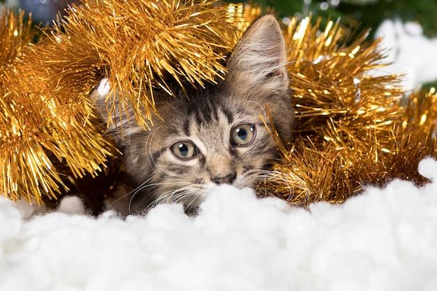 かわいい子猫が見掛け倒しと雪に隠れて目をそらします