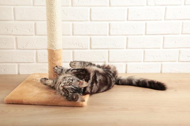 Милый котенок играет с когтеточкой на светлом фоне.