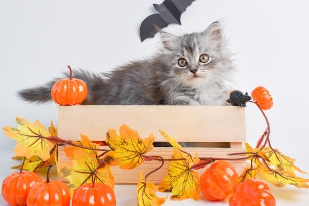 혀가 있는 귀여운 새끼 고양이가 호박 옆에 있는 나무 상자에 앉아 있습니다. 해피 할로윈. 공간을 복사합니다.