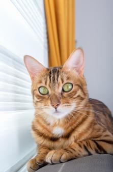 Милый котенок лежит на спинке дивана в гостиной у окна. вертикальный выстрел