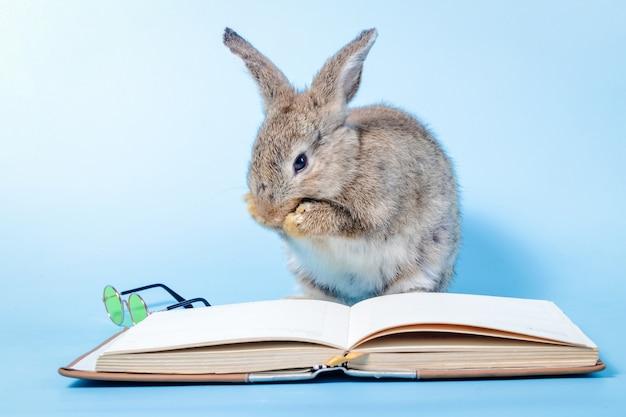 Милый маленький серый кролик читает книгу и держит рядом небольшую пару очков. на синем фоне. образовательная концепция