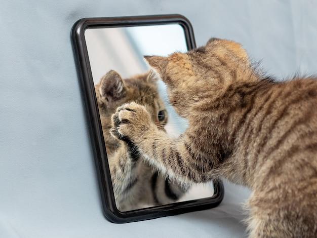 かわいい子猫が鏡に映った姿で遊んでいます