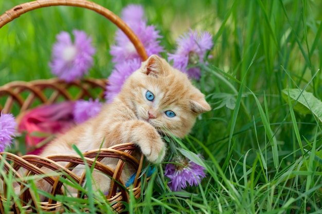Милый котенок сидит в корзине в саду рядом с цветами