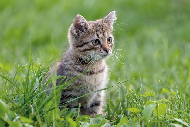 かわいい子猫が芝生の上の庭に座って、遠くを見つめています
