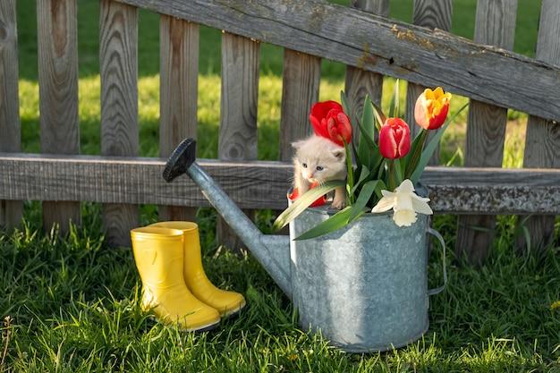 귀여운 작은 새끼 고양이는 꽃과 함께 물을 수 위에 앉아