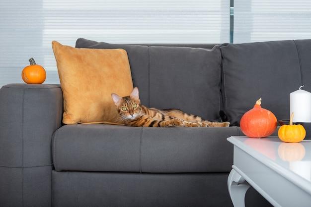 귀여운 애완 고양이가 할로윈을 위해 장식된 방의 소파에서 휴식을 취하고 있습니다.