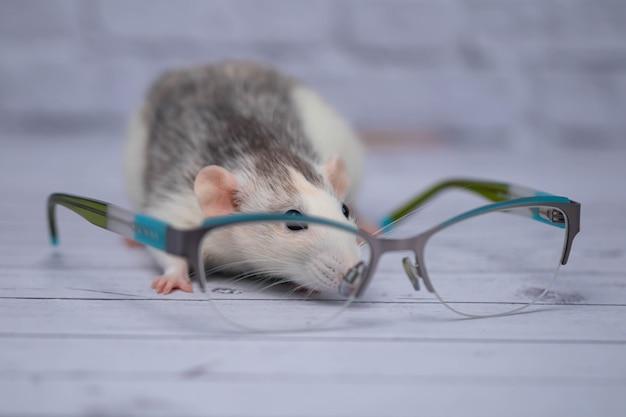 透明なメガネをかけたメガネの横にかわいいネズミが座っています。賢い齧歯動物。