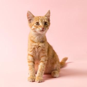Милый рыжий котенок на розовом фоне. игривый и веселый питомец, заготовка для рекламы, плакат, продажа, ветеринарная клиника. скопируйте пространство.