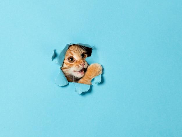 Милый рыжий котенок выглядывает через дырочку в бумаге. игривый и веселый питомец, заготовка для рекламы, плакат, продажа, ветеринарная клиника.