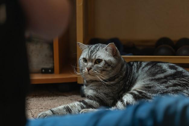 Милый ухоженный котик дома.