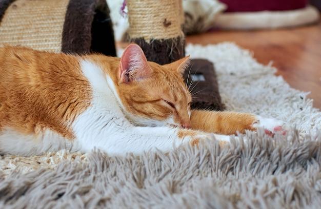 Милый бело-рыжий кот спит на коврике