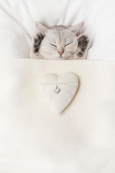 かわいい白い英国の子猫は、白いテキスタイルの心で、白いニットの毛布の下で眠ります