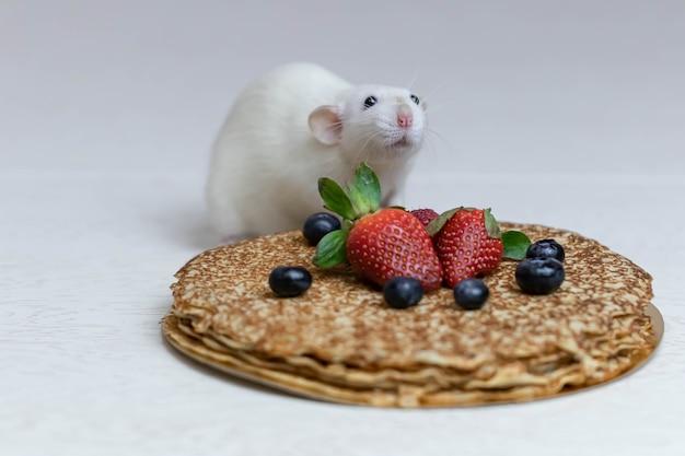 귀여운 흰색 장식 쥐는 딸기와 블루 베리와 함께 맛있는 팬케이크에 앉는다.