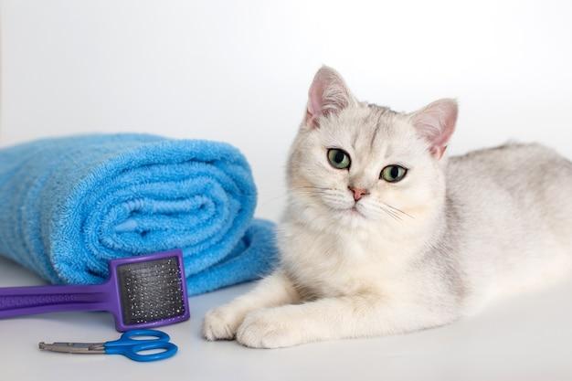 かわいい白い子猫は、白い表面に青いタオルのロールで横たわっています。はさみと櫛が近くにあります。