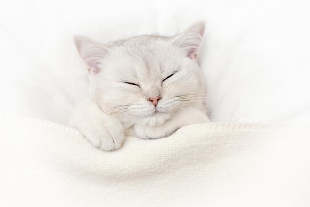 Милый белый котенок спит на белой кровати под вязанным пледом.