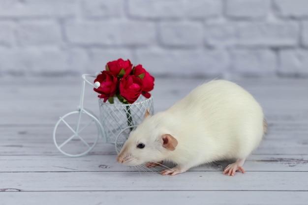 Милая белая крысочка сидит рядом с букетом красных цветов. цветы собраны в белую велосипедную игрушечную корзину.