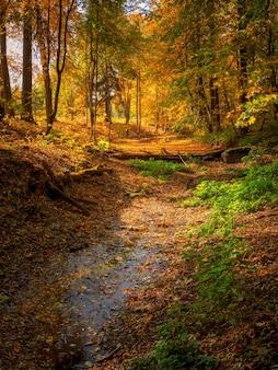 古い放棄された秋の公園のダム。カエデの葉が落ちた明るい日当たりの良い秋の風景。垂直方向のビュー。