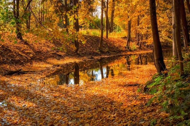 古い放棄された秋の公園のダム。カエデの葉が落ちた明るい日当たりの良い秋の風景。 Premium写真