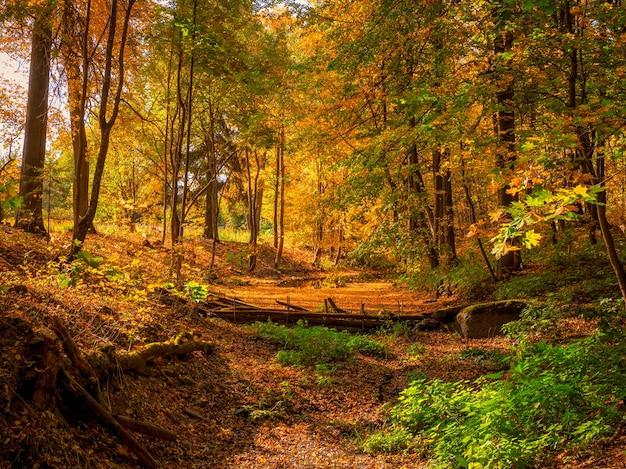 古い放棄された秋の公園のダム。カエデの葉が落ちた明るい日当たりの良い秋の風景。