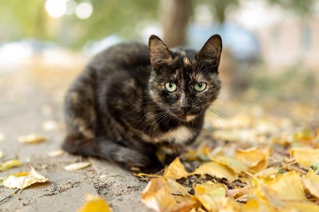 녹색 눈을 가진 진한 갈색 길 잃은 고양이가 카메라를 본다.