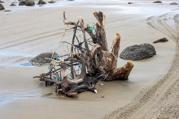 Ветка мертвого дерева на коричневом песчаном морском пляже крупным планом