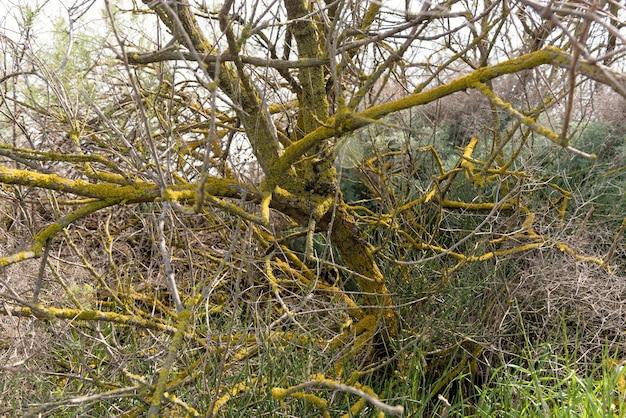 Мертвое дерево заросло мхом