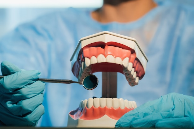 青い手袋とマスクを身に着けている歯科医は、上顎と下顎の歯科模型と歯科用ミラーを持っています。