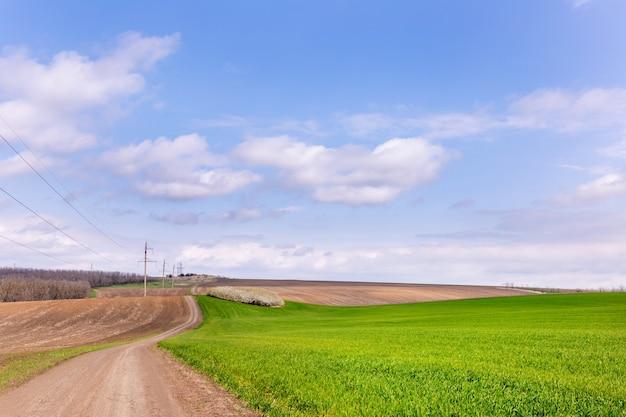 Грунтовая дорога среди зеленого поля пшеницы. красивый сельский пейзаж.