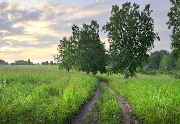 숲을 배경으로 아침에 울창한 풀과 야생화 사이의 흙길